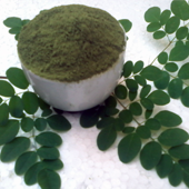 Organic Moringa Powder - Suppliers & Manufacturers in India